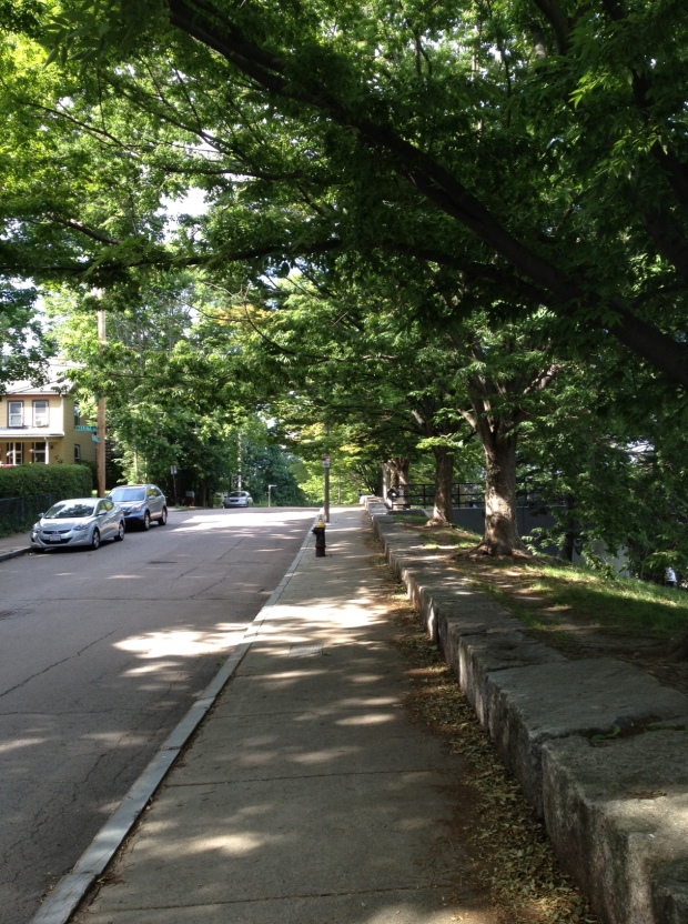 SW Corridor Park, Jamaica Plain, Boston (photo: DY, June 2015)